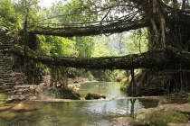 LivingRootBridges
